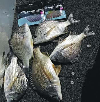 "For soft plastic users, 2-3"" grubs are a great lure for targeting winter bream that are holding deep on the rock walls."