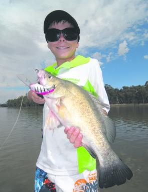 When the golden perch are on, they will smash even the largest of lures.