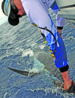 The author releases a blue marlin estimated at 160kg at the Tweed Canyons.