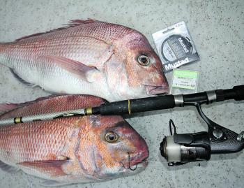 Snapper can be finicky feeders at times in Port Phillip Bay. A snelled Octopus setup allows you to fish whole baits.