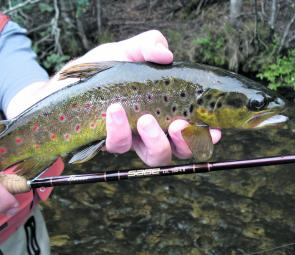 Bigger fish are about in the broken streams – as the water warms into November these fish will be keen to chase caddis and other dry flies.