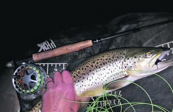 Wayne Atkinson caught this decent lake Wendouree brown trout on a rabbit fur fly from a float tube.
