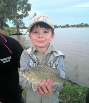 Angus Behnke landed this fit little silver perch at Lake Albert, Wagga. It's great to see silvers making a comeback in a lake that was all but dry less than three years ago.