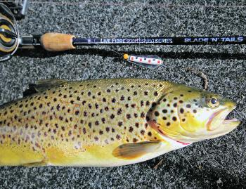Trout will cannibalise at certain times of the year, and this is when trout coloured lures will work well.