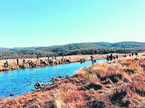 The crowded scene on the Eucumbene River as anglers of all persuasions happily fish shoulder to shoulder in search of a trophy brown trout.