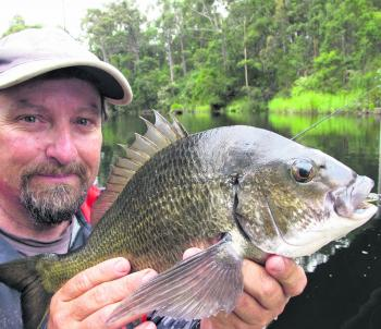 A 43cm bream caught on an unweighted plastic under the bridge near the freshwater falls.