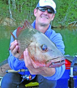 John Maric earned this mangrove jack in prime condition on bream gear.