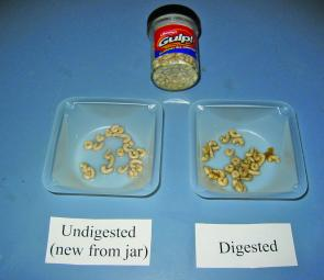 This picture shows there is little difference between these new Maggots and Maggots that have been digested by fish.