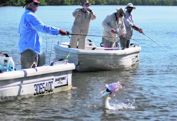 A nice barra takes to air in run-off waters of the Cape's west coast