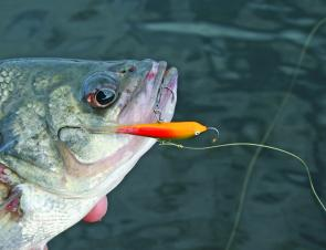 Ice jigs are a great lure choice for the schooling bass at The Junction in Borumba Dam.