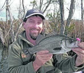Estuary perch have made a welcome return to the Gippsland Lakes.