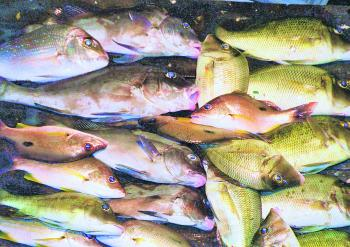 There are still plenty of opportunities to score a mixed bag or reef fish across the bay.