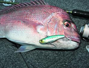 Shallower marks from 13-15m have been very productive of late, and many anglers have been reporting good success using larger baits and targeting more solitary snapper.