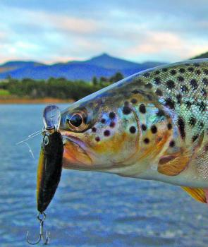 November is a good month for searunners – hardbodied lures are a great method.