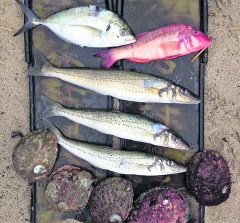 A South West coast mixed bag of reef species.