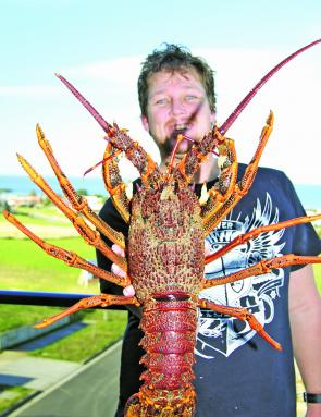 A 3.15kg Cray: mid November marks the start of the cray season in Victoria with Apollo Bay being popular amongst both shore and boat based divers.