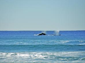Some whales frolicking so close to shore you could hear them! Just one feature of the beautiful Teewah area this month.