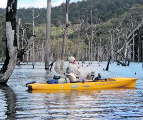 Kayak guide Darryl Head in the Tallowa Dam timber.