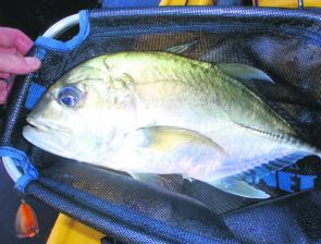 Plenty of GTs and bigeye trevally in the upper reaches of the estuaries make for interesting tussles on light bream gear.