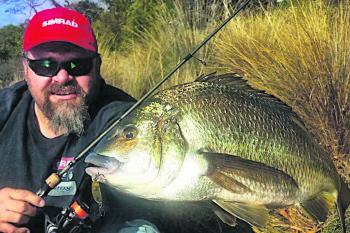 The author was super chuffed with this bream to say the least, and to catch it on his home river was icing on the cake.