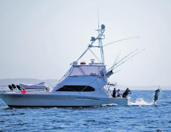 A Port Stephens inshore black marlin makes a last ditch effort to escape!