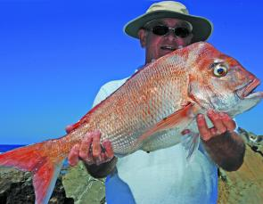 This Summer snapper was picked up on the drift in 40m of water.