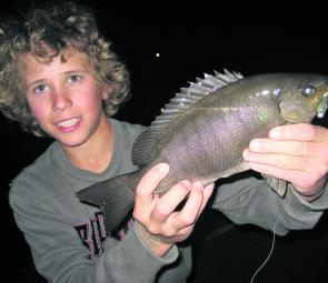 Jackson Mitchell, of Ballina with a luderick caught on a soft plastic in the canals at Ballina Quays.