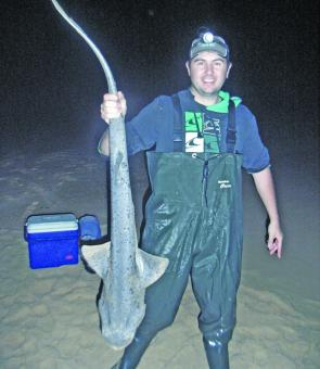 The seven- gill sharks have been around in big numbers for this time of year. We caught a mixed bag of sharks this night. This guy took a piece of squid.