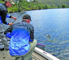 With light leaders it takes finesse and team work to land hard fighting east coast Tasmanian bream.