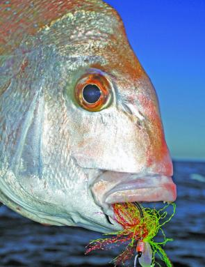 Black Magic Snapper Snatches are a popular rig. Complete with a super sharp circle hook, they are deadly.