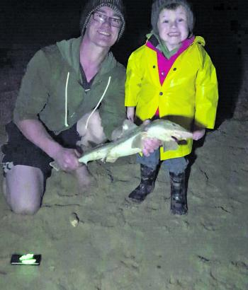 Andy Connelly and his son caught and released this nice gummy shark caught at McGaurans Beach.