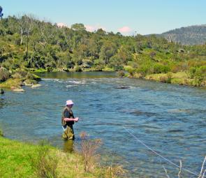 The Thredbo River looks absolutely magnificent this season and has been fishing as well as it looks.