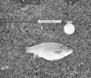& 3. Bass are becoming increasingly common in Bullen Merri and summer is the time to target them.