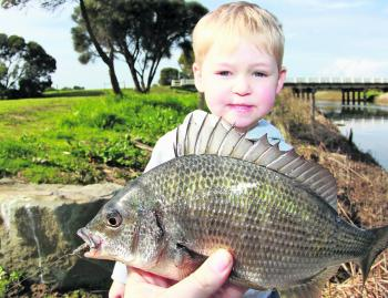 The Barham River right in Apollo Bay is a great spot for the whole family to catch a fish.
