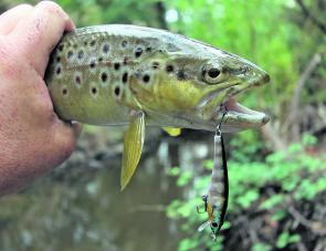 The regions many small streams and rivers should really come to life in October when the water is still really cold and there is an increase in available food for trout.