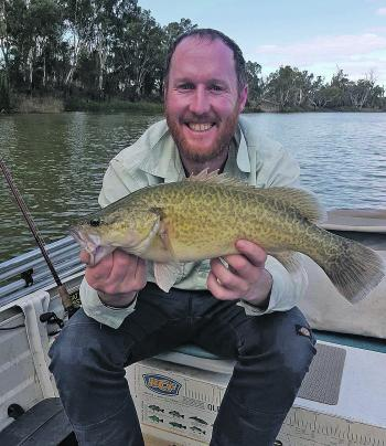 Little Murray cod like this beaut are a good sign that the big ones are still out there.