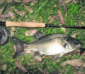 This chunky bass took a surface fly at Lake Lyell.