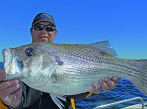 A big pearl perch taken from the 50-fathom line; pealies have been in great condition with winter.