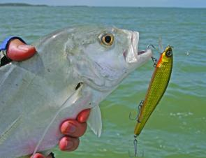 A small trevally with a taste for Tropic Angler minnows.