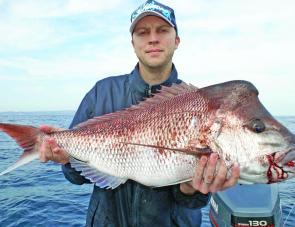 A whole 91cm of prime snapper caught by Andrew Phillips on a nuclear chicken Gulp