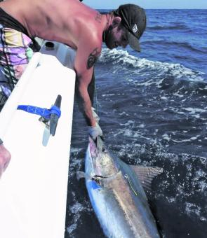 Steve Metz with a small Sydney black marlin.