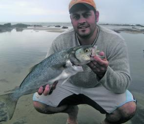 Steve Patti with the average size tailor caught off the rocks and beaches lately.