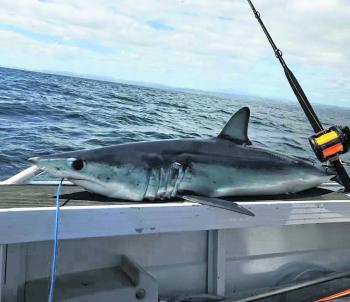 Ayden Bourke knocked this nice mako over with the Penn Squall.