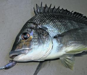 Bream fishing shouldn't be too bad in Brisbane Water or the lakes this month.