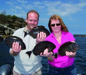 Tasty surgeon fish are a fairly regular by-catch in deeper waters of the Harbour.