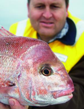 Snapper of all sizes are slowly starting to appear all over the Bay. In November they will reach their peak.