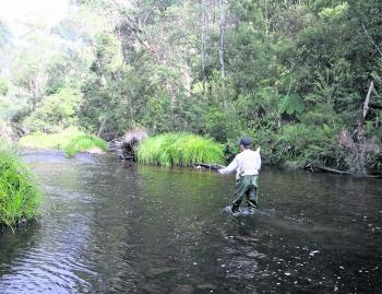Where the end of the run meets the slow running pool, trout are usually lurking.