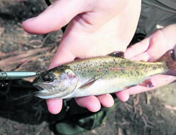 Fishing skinny water isn't all about catching monster trout. The majority of trout caught range from 15-30cm.