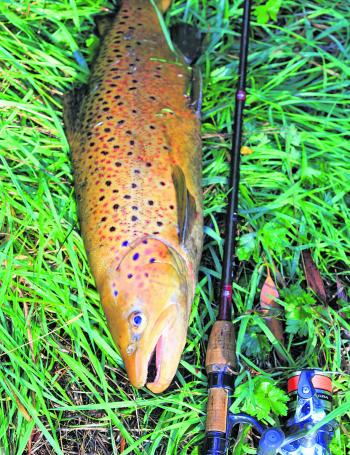 You don't have to fish with heavy tackle for trout. Often a light approach is the best.