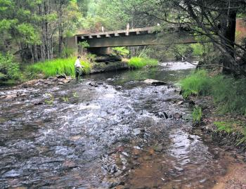 Bridges can offer good locations for cover however; it is the slower pools where you are most likely going to find fish.